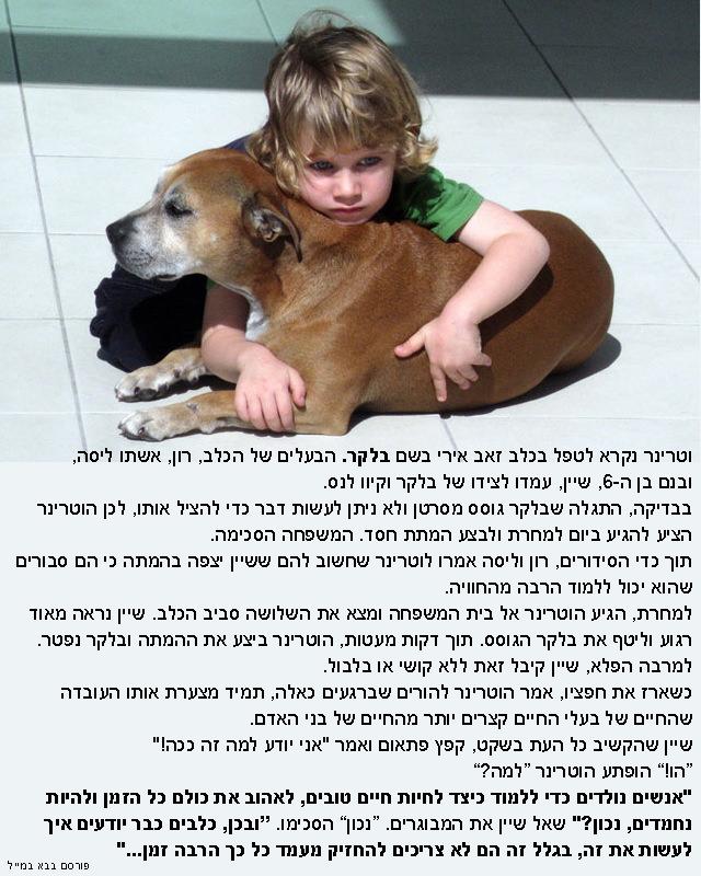 סיפור מרגש על ילד וכלב