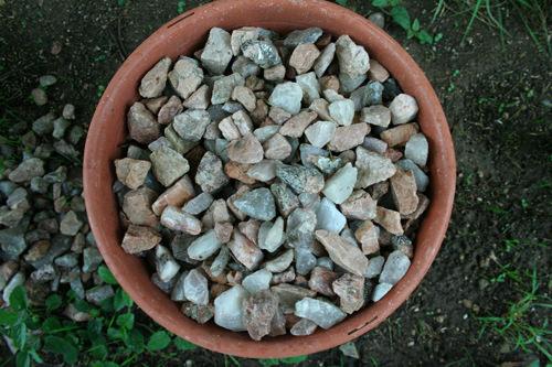 אבנים בעציץ