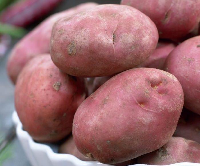 זנים של תפוחי אדמה