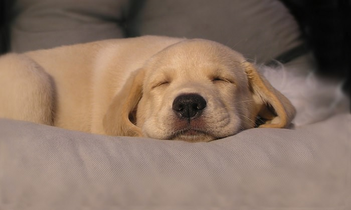 טיפים לשינה טובה