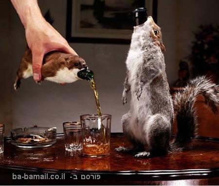 בירה עם אחוזי אלכוהול גבוהים