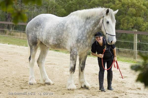 הסוס הגבוה בעולם