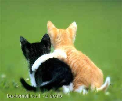 חתולים חברים