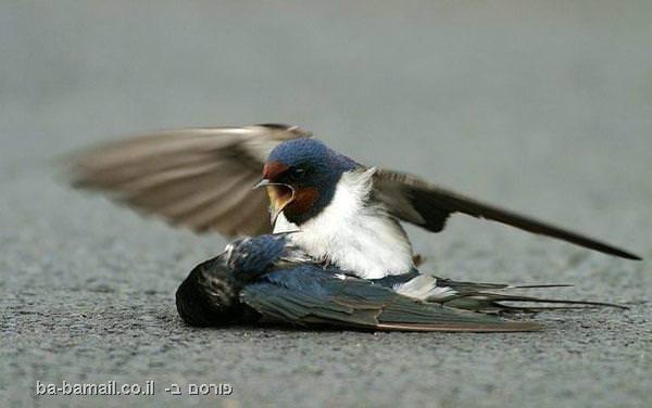 ציפורי דרור