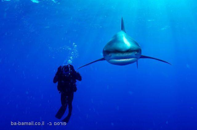 תמונות מדהימות של כרישים