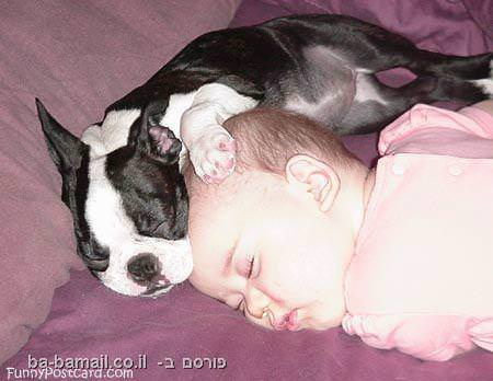 מצחיק, תמונות, בעלי חיים, כלבים, תינוק