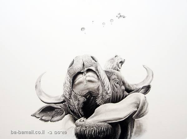 בעלי חיים, איור, עיצוב, עפרון