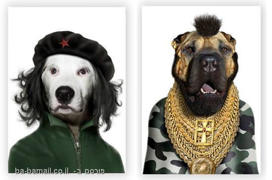 כלבים, חתולים, מפורסמים, סלבס, מיסטר טי, צ'ה גבארה