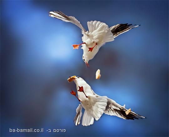 צילומי פעולה, תמונה, ציפורים