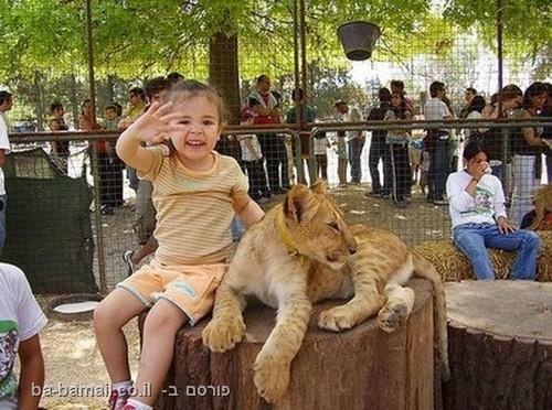 גן חיות, בואנוס איירס, אריה, ארגנטינה