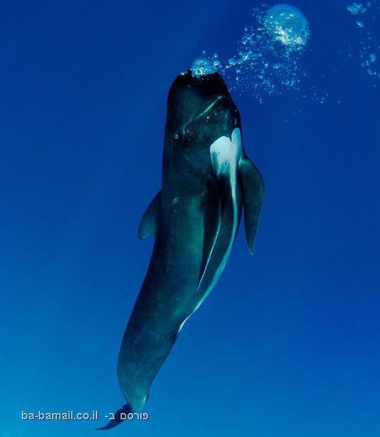 לוויתן, מתחת למים, צלילה, צילום