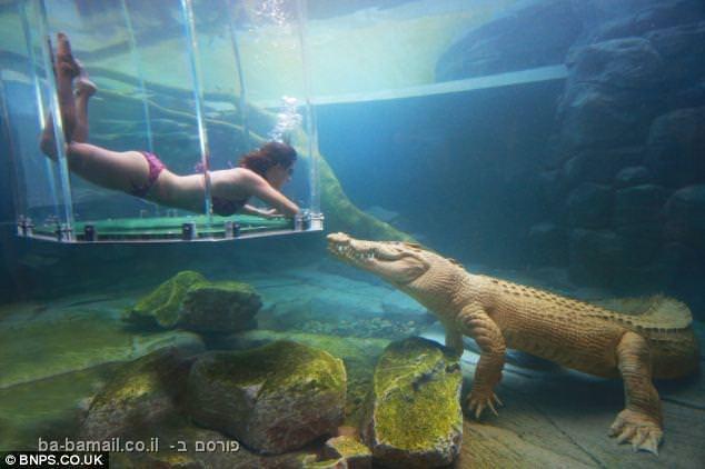 תנינים, צלילה, אקסטרים, טבע