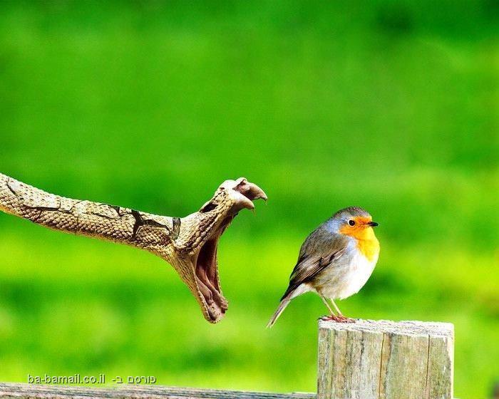 חיות, תמונות, מדהים, דרמטי, חיות, בעלי חיים, טבע, נחש, ציפור