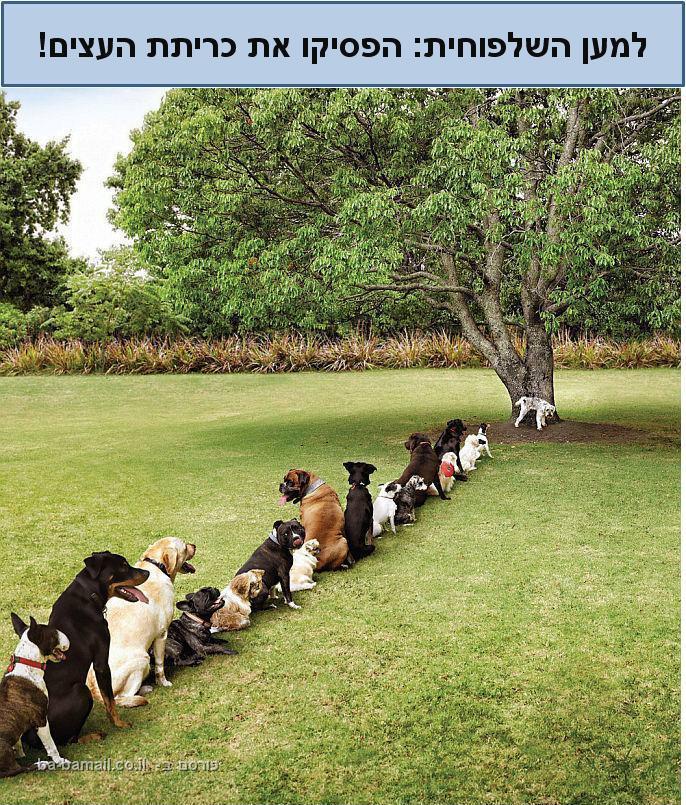 הסיבה בגללה בריאות החיות בטבע בסכנה - חזק!