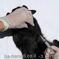 חיסון לכלבת