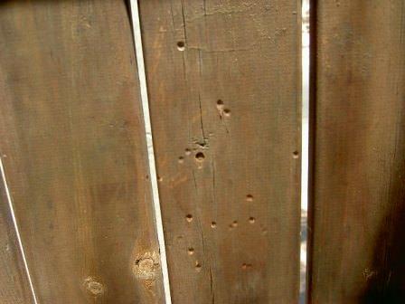 גדר ומסמרים