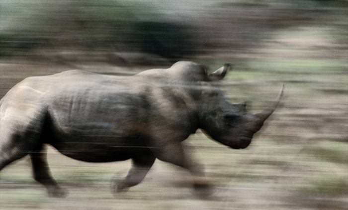תוך כדי תנועה - תמונות מדהימות של בעלי חיים!