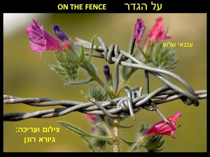 תמונות מקסימות של צמחיה בישראל