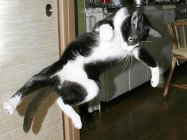 תמונות של חתולים סמוראים