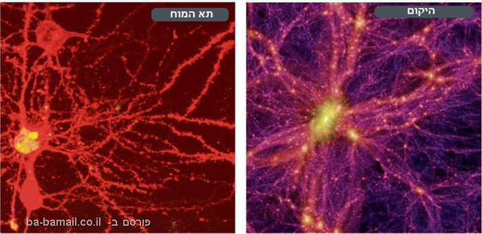 תא המוח והיקום
