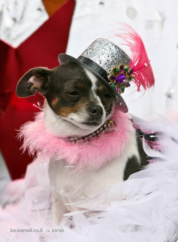תערוכת כלבים ססגונית בניו אורלינס (בעריכה)