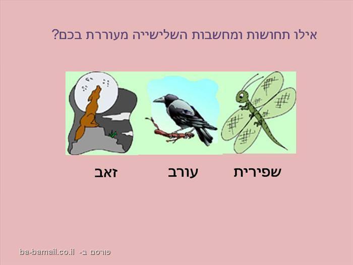מבחן פרספקטיבות על פי בעלי חיים