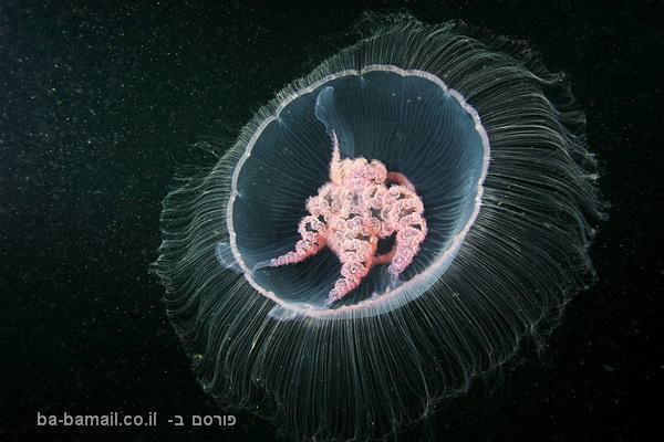 חיות מיימיות מוזרות