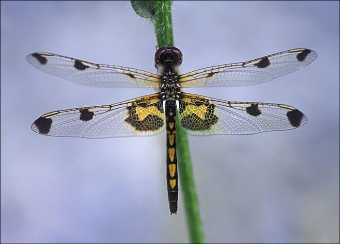 אוסף תמונות של חרקים בצבעים נדירים!