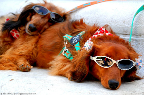 כלבים בקיץ