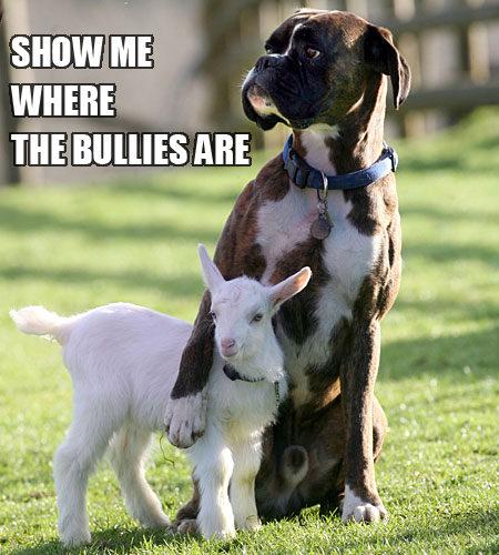 חברויות לא צפויות בין בעלי חיים - מקסים! (בעריכה)