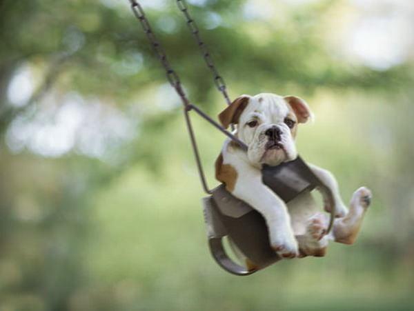 כלבים ונדנדות