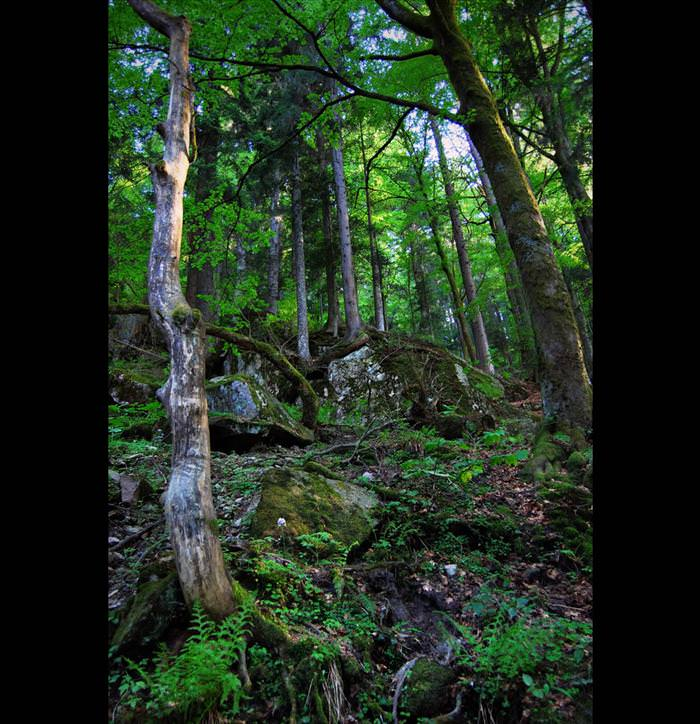 היער השחור