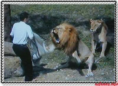 חיות בזמן תקיפה