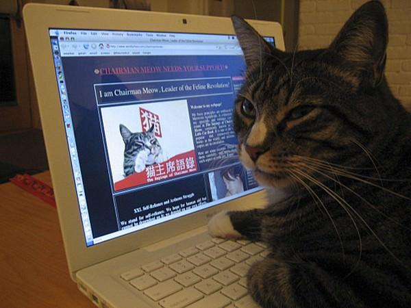 חיות ומחשבים - תמונות מקסימות! (בעריכה)