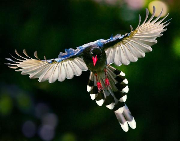 ציפורים נדירות