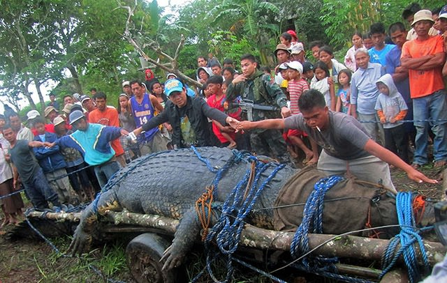 תנין הכי גדול בעולם