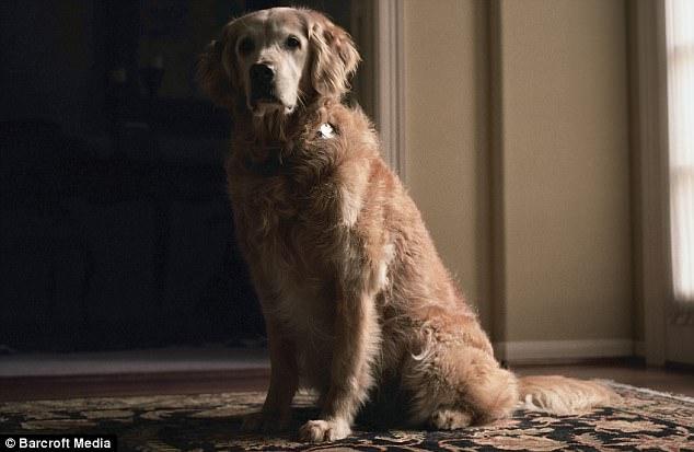 כלבי חילוץ 9/11