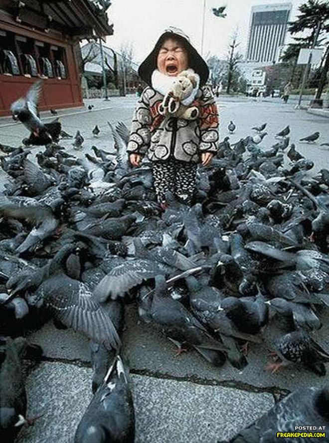 ציפורים תוקפות