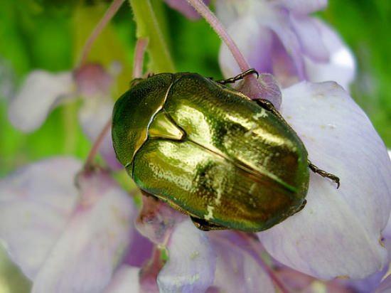 חרקים צבעוניים