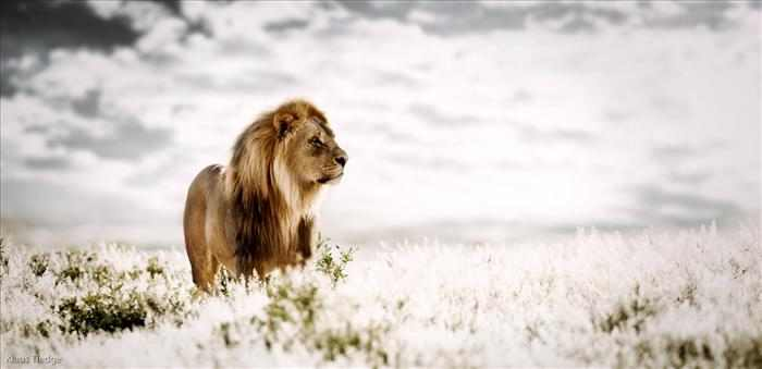 הגאווה של אפריקה - תמונות מדהימות!