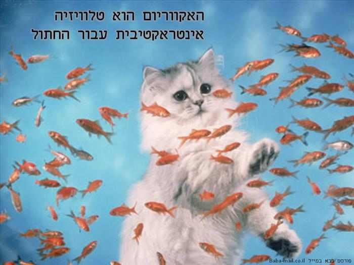 העולם על פי החתול - משעשע!