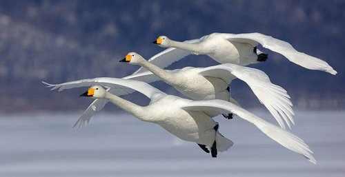תמונות יפות של בעלי חיים בשלישיה