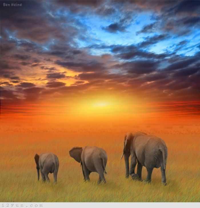 תמונות מרהיבות מאפריקה