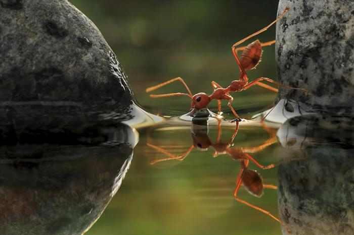 תחרות בינלאומית לצילומי גינה 2012