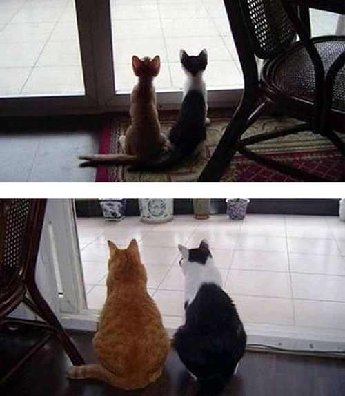 חתולים אז והיום