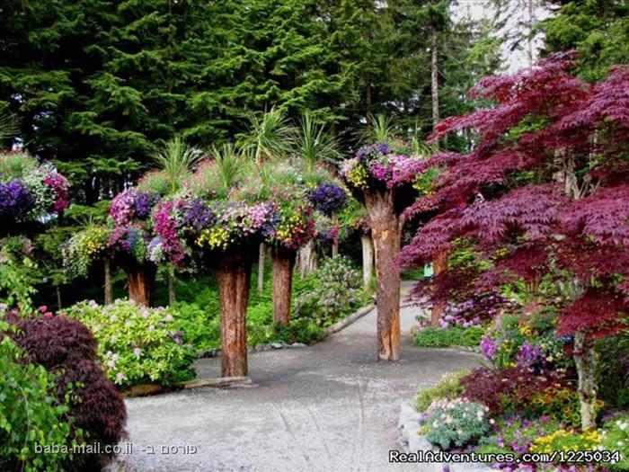 העצים ההפוכים באלסקה