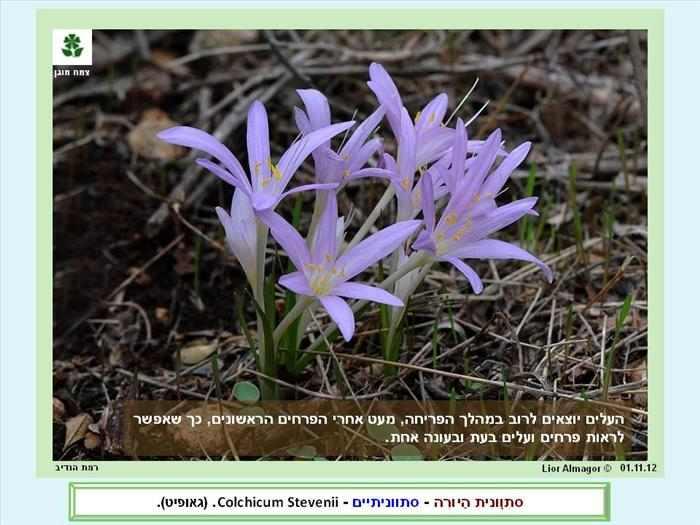 תמונות עדכניות  של החי והצומח בישראל
