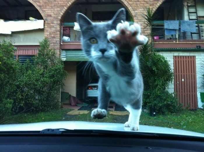 תמונות חתולים שצולמו ברגע הנכון
