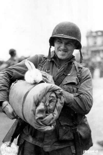 כלבים וחיילים - תמונות מרגשות