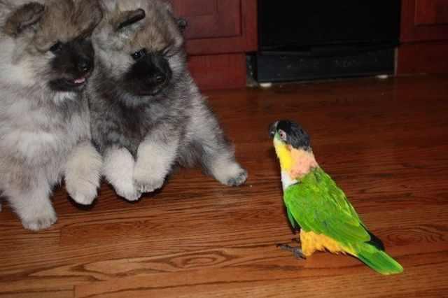 תמונות מצחיקות של חיות מחמד